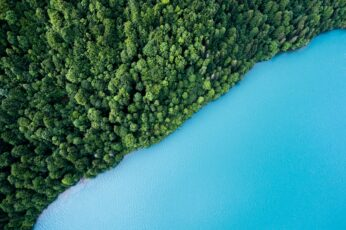 Bird's eye view photo of trees and body of water