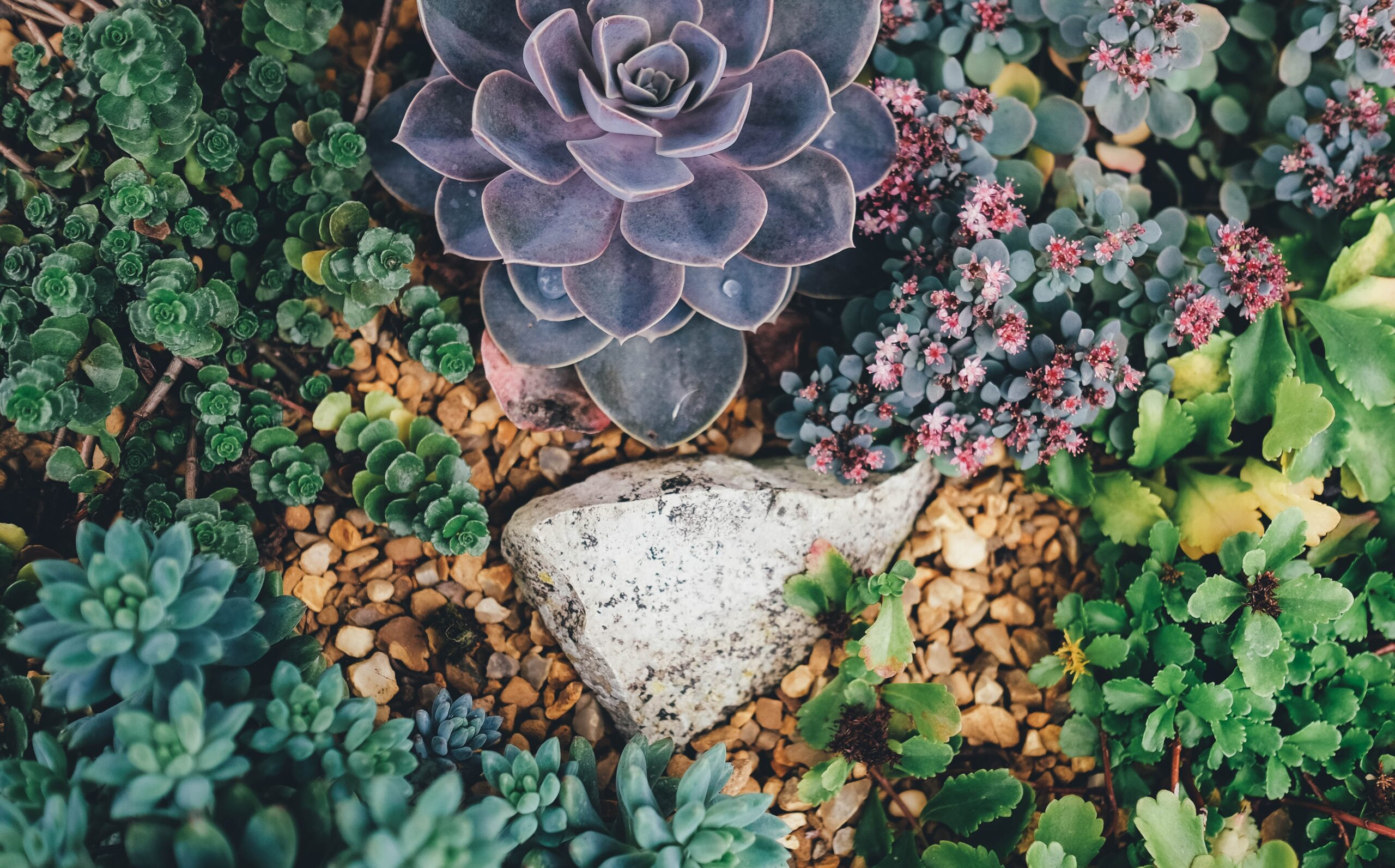 wallpaper Greystone surrounded by succulent plants