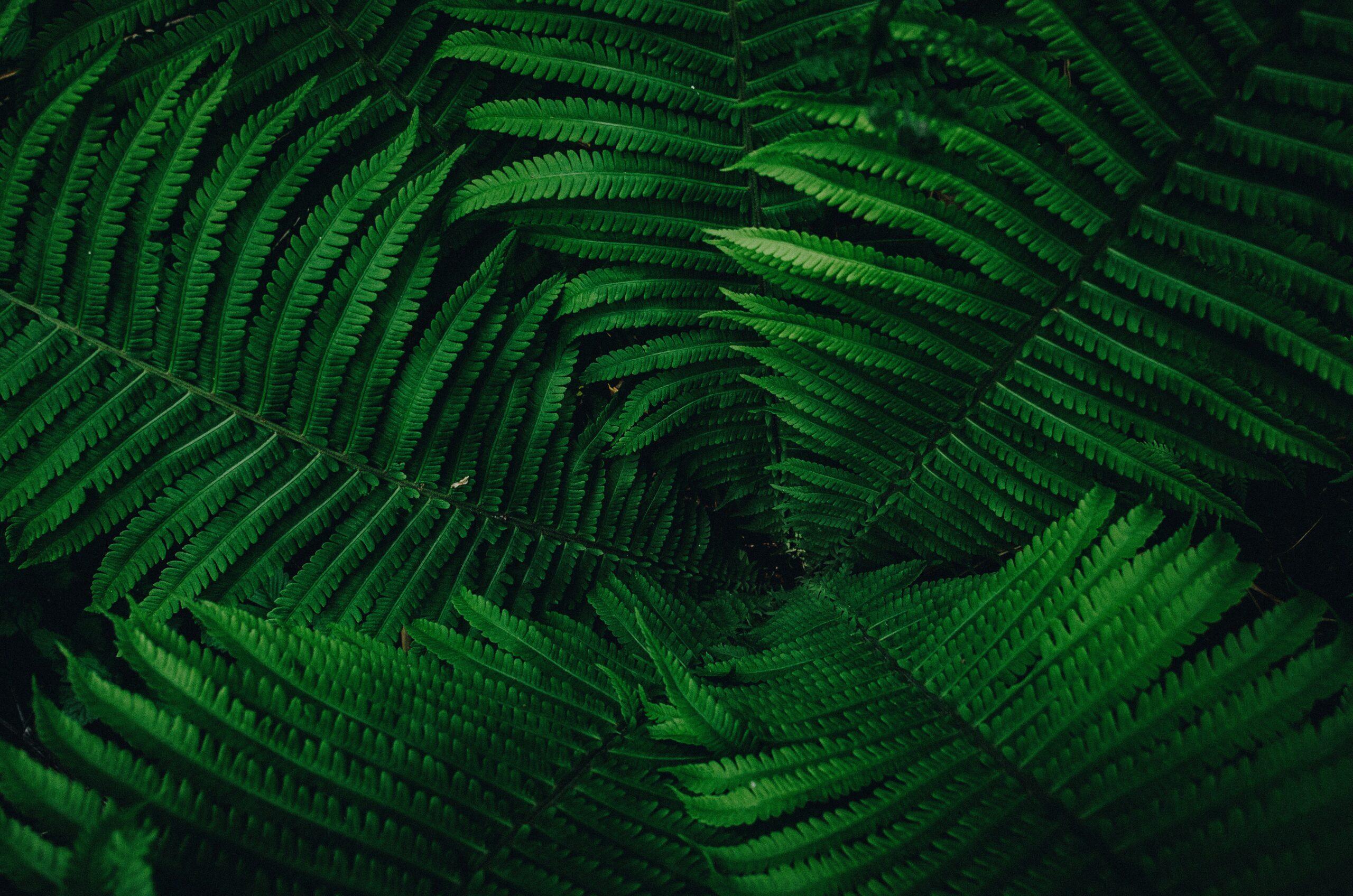wallpaper Green leaves