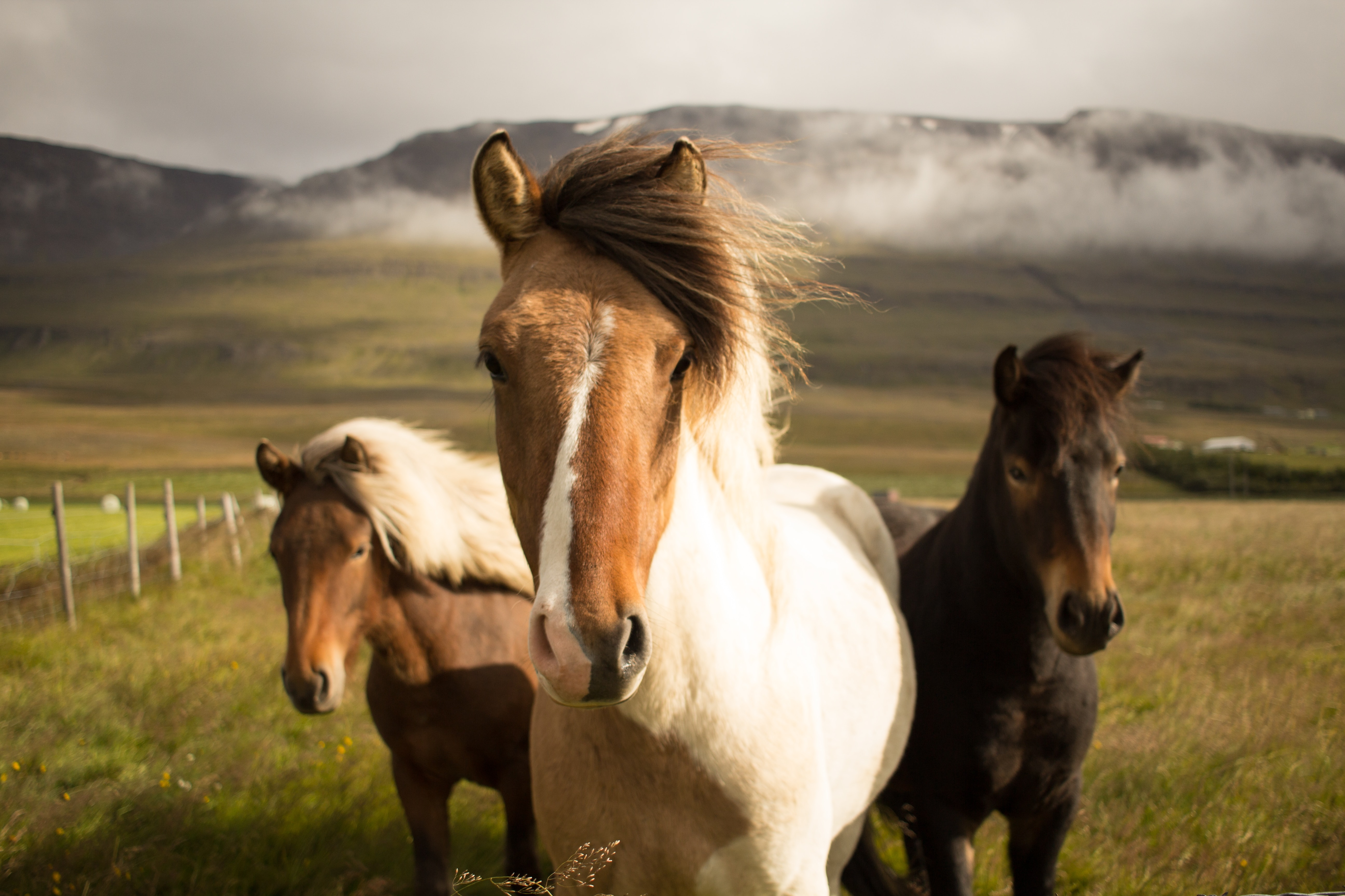 wallpaper Three assorted-color horses running away from a mountain