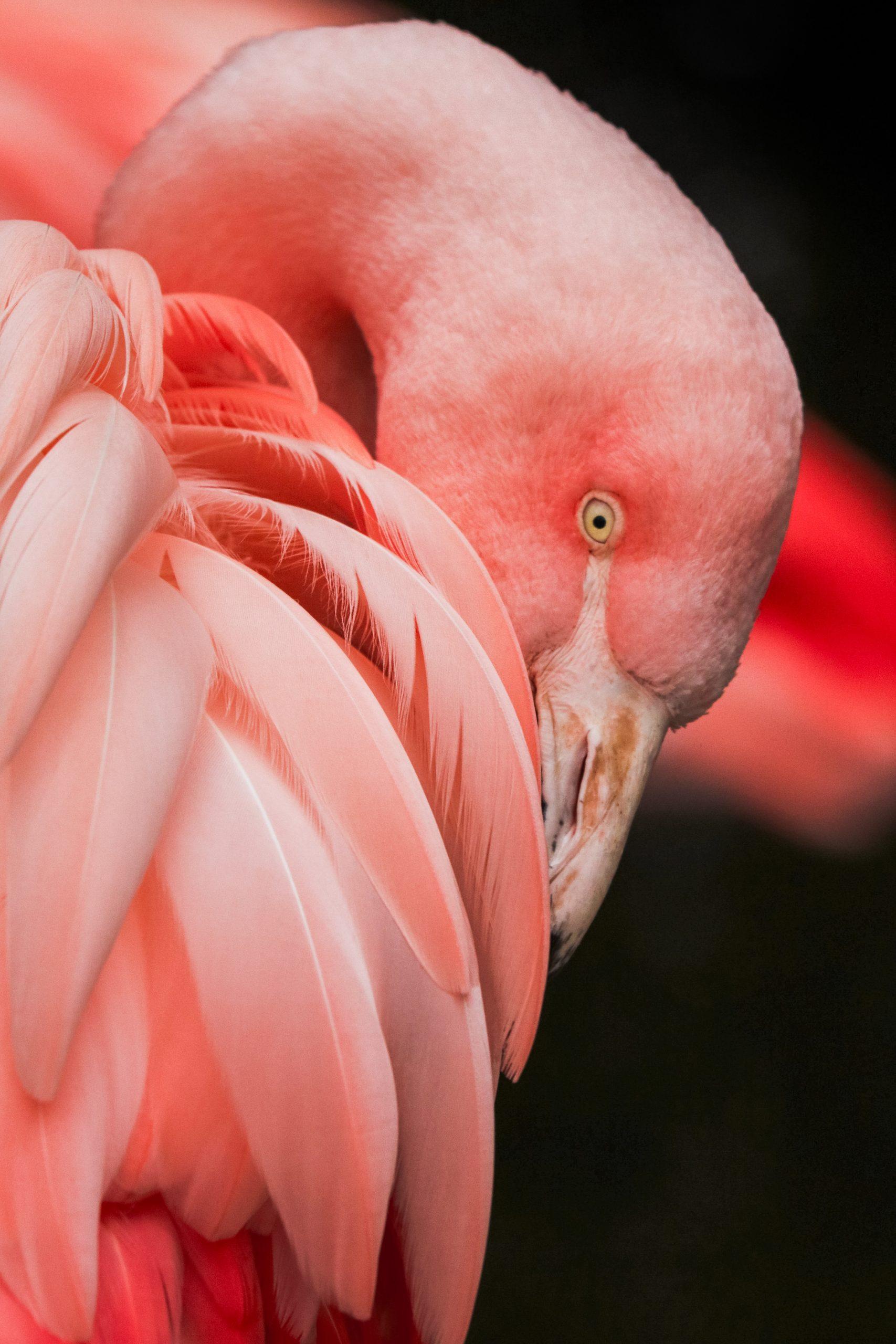 wallpaper Close up photography of a pink bird