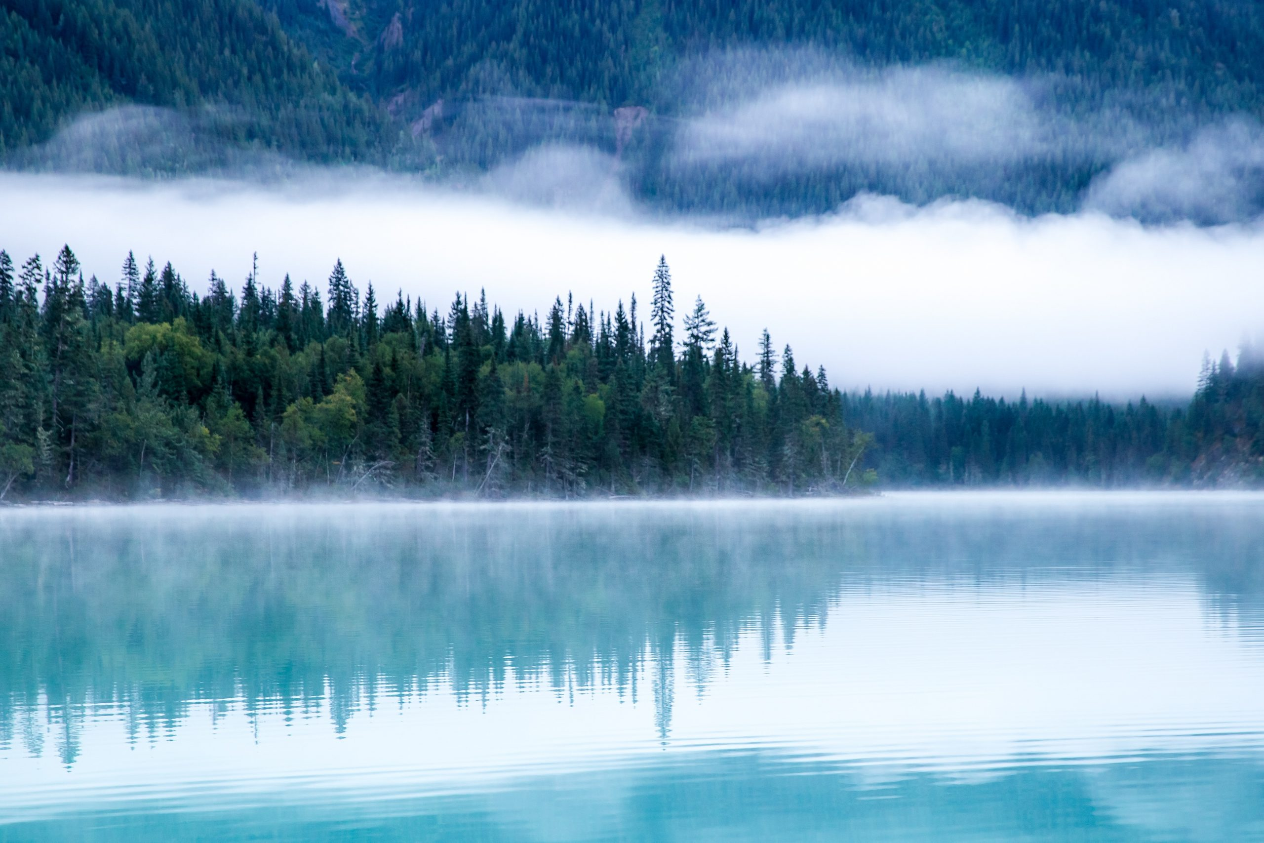 wallpaper Body of water surrounding with trees