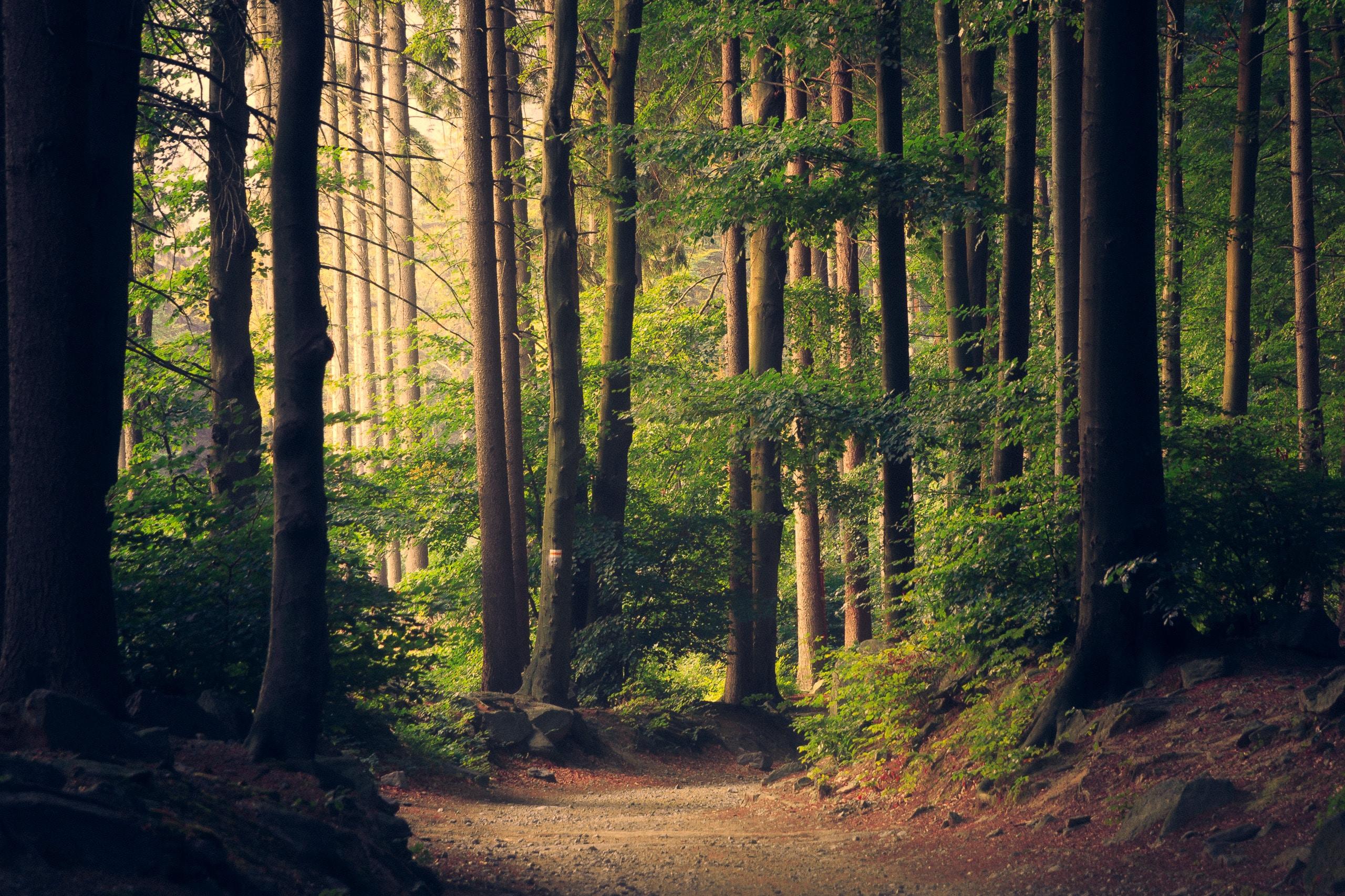 wallpaper Beautiful woodland path