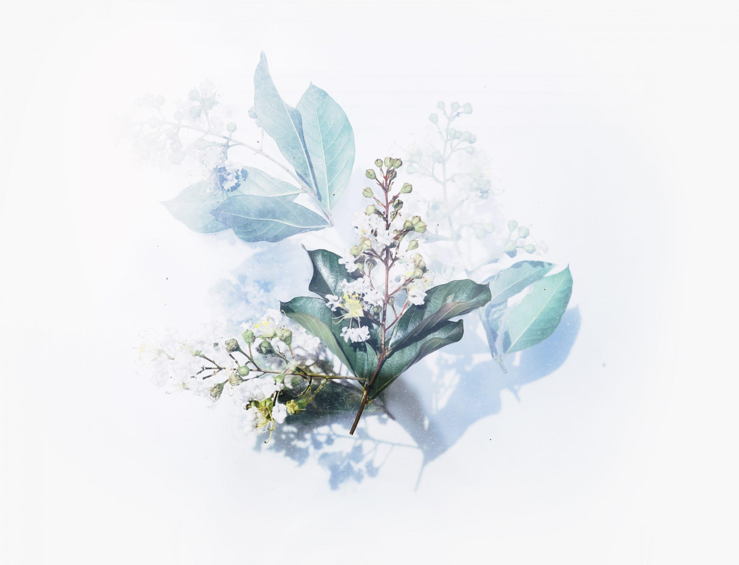 wallpaper White flowering plant artwork