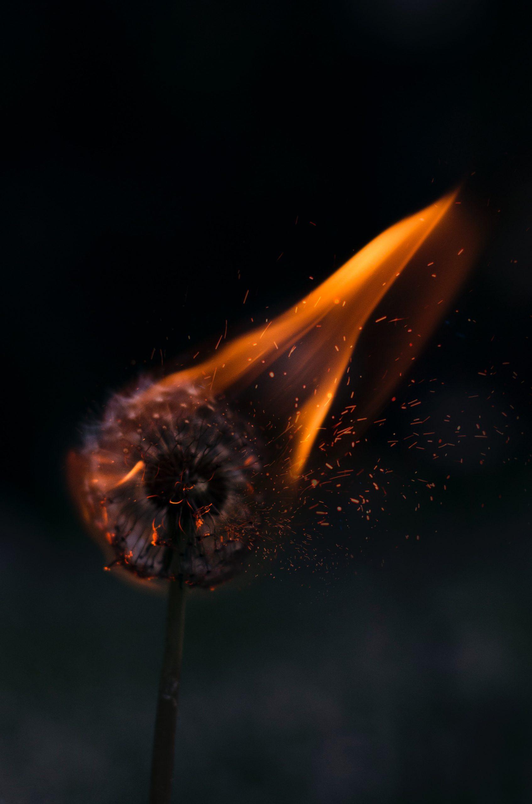 wallpaper Burning white dandelion