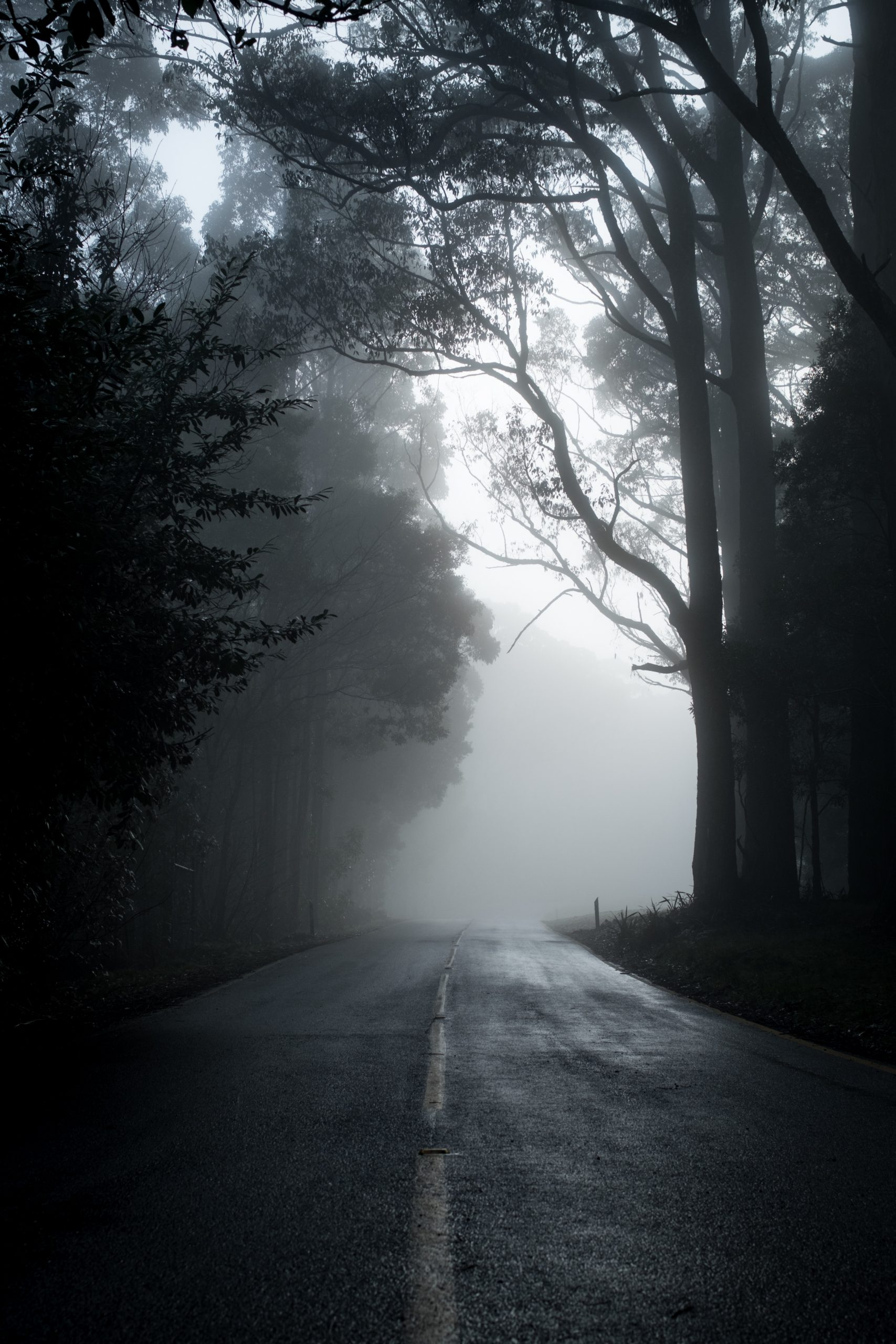 wallpaper Gray road in between trees in grayscale photography
