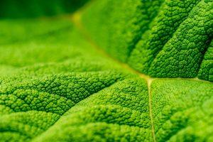 Wallpaper Green leaf