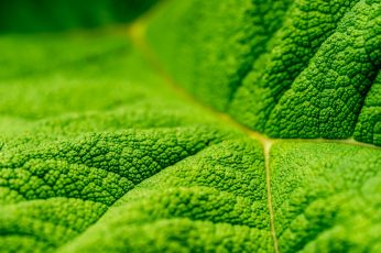 Wallpaper Green leaf