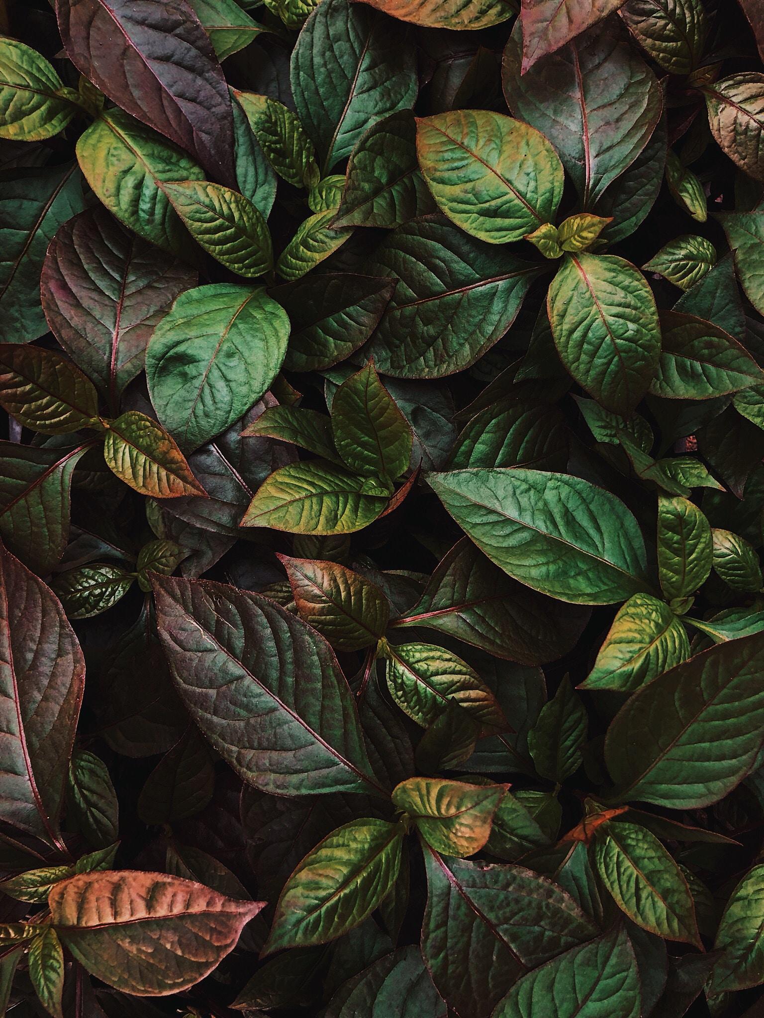 Macro Wallpaper