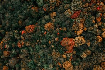 Aerial of green-leafed trees