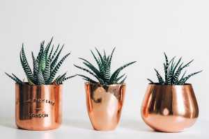 Three gold pots with plants wallpaper