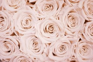 White flower lot wallpaper