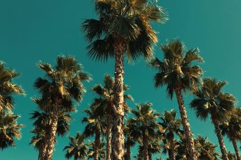 Worm view photo of palm trees