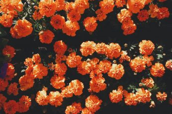 Blooming orange petaled flowers