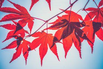 Autumn season pictures