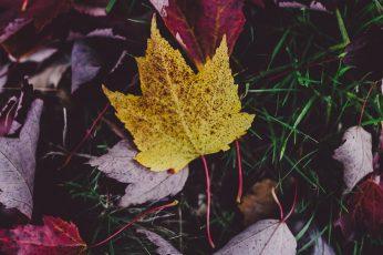 Desktop images autumn