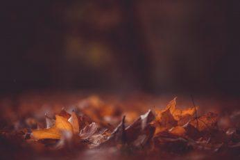 Cute fall desktop backgrounds