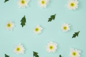 Artificial white flowers chamomile