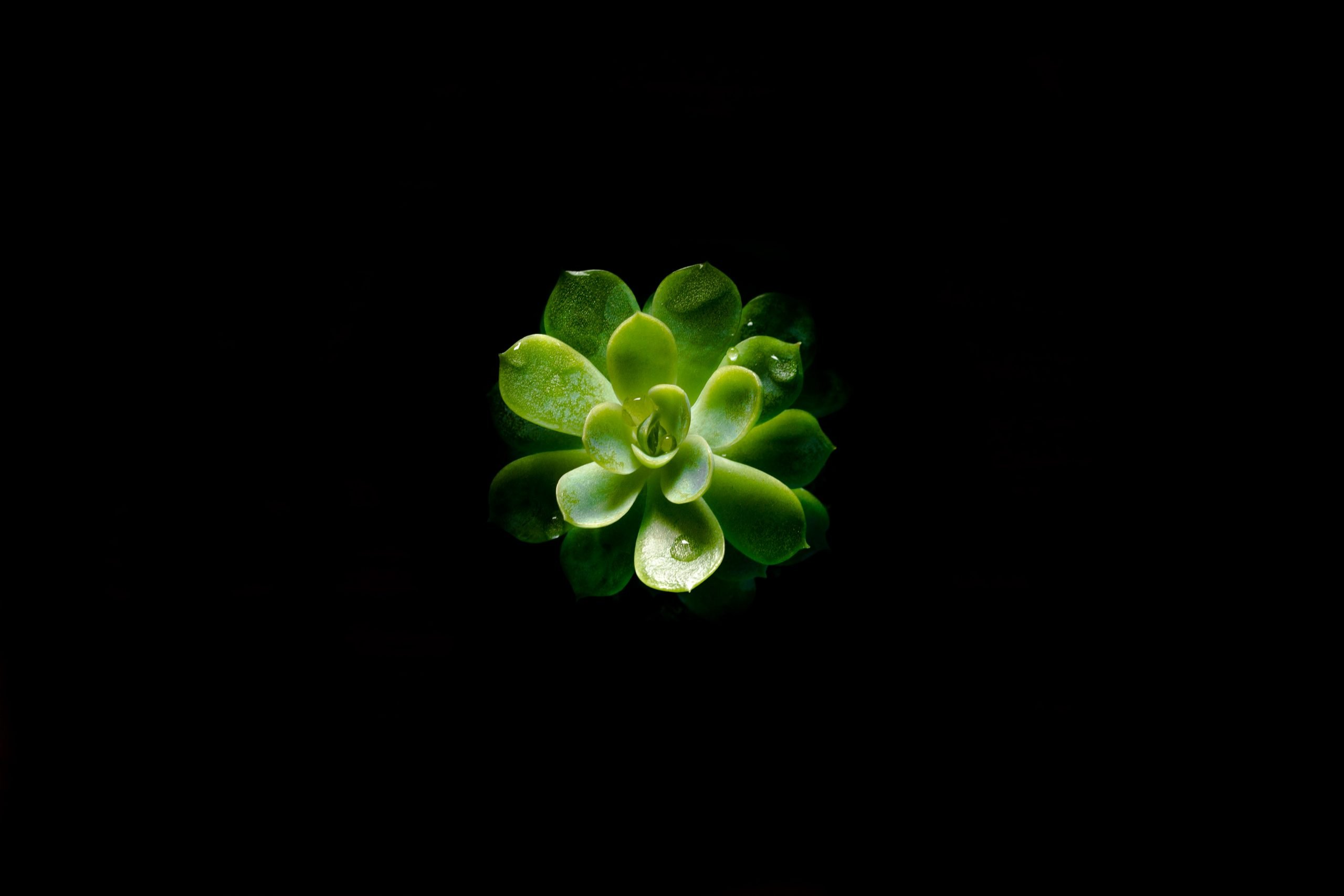 Plant Black Wallpaper Wallpaper For You Hd Wallpaper For Desktop Mobile