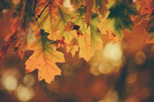Autumn wallpaper 4k