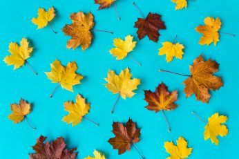 Autumn Leaves on Flat Blue Background fall flat design leaf wallpaper