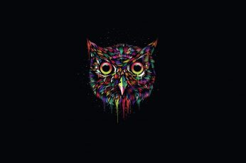 Multicolored owl illustration, the dark background, paint, minimalism wallpaper
