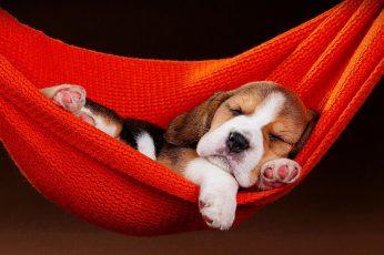 Dog wallpaper, puppy, sleeping, hammock, cute, doggie, doggy