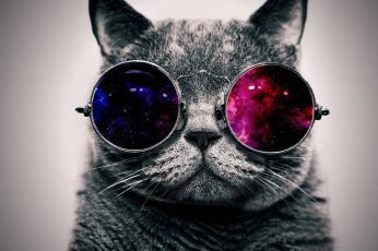 Grey cat and sunglasses, space, abstract, minimalism, animals wallpaper
