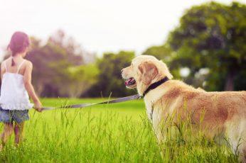 Girl With Golden Retriever Dog, adult golden retriever, Baby wallpaper