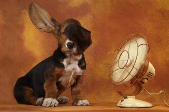 Funny cute dog, animals, hd, best wallpaper