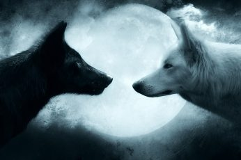 Two black and white wolves wallpaper, wolf, couple, animal, animal themes wallpaper