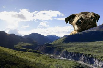 Dog wallpaper, cute, meme, landscape, mountains, giant, mops