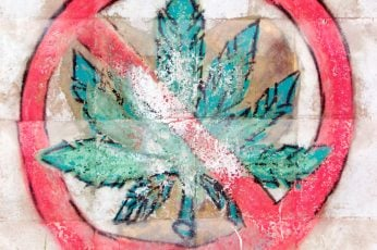 Wallpaper marijuana, not, green, medical, pot, drug, sign, leaf, narcotic