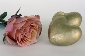 Wallpaper pink rose beside two gold heart decors, salmon, rose bloom, flower