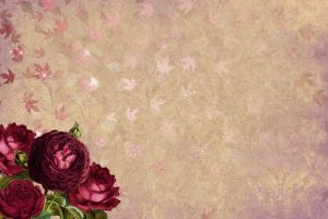 Wallpaper four red petaled flowers near beige surface, roses, leaves, gold