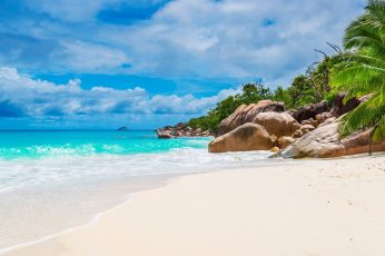Sea, bay, palm tree, summer, vacation, coast, ocean, shore wallpaper