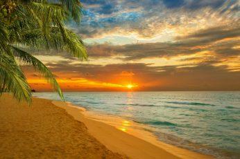 Sunset, sea, summer, palm, sky, tropics, caribbean, paradise wallpaper