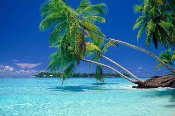 Green coconut palm tree, nature, landscape, beach, tropical, sea wallpaper
