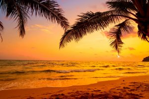 Sky, sea, tropics, sunset, palm tree, arecales, tropical landscape wallpaper