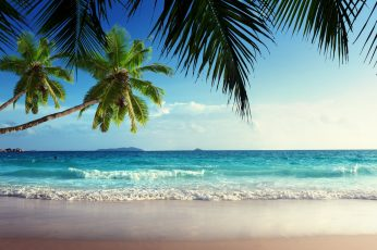 Landscape, palm trees, sea, tropical, beach wallpaper