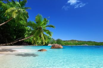 Two coconut trees, landscape, beach, palm trees, tropical, sea wallpaper