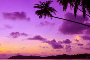 Purple sky, palm, afterglow, sunset, palm tree, dusk, silhouette wallpaper