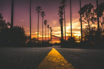 Road, palms, sky, purple sky, sunset, evening, purple sunset wallpaper