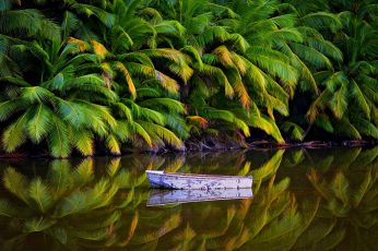 White boat on body of water, nature, landscape, palm trees, jungle wallpaper