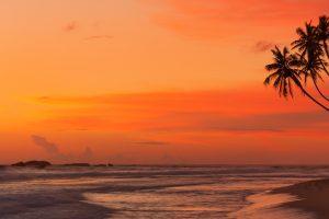 Landscape, sea, palm trees, tropical wallpaper