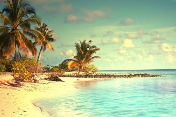 Green beach palm trees, tropical, sky, water, beauty in nature wallpaper