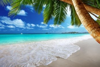 Sea waves and green coconut trees, beach, palm trees, tropical wallpaper