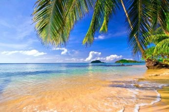 Coconut trees near water, landscape, tropical, beach, palm trees wallpaper