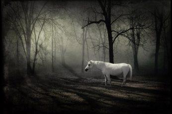 Unicorn wallpaper HD, white horse, fantasy