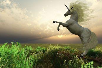 Animales, cuentos, fantasia, mitologia, mitos, unicorn wallpaper, unicornio-real